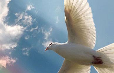 Sin Paz ni Justicia, no está Dios
